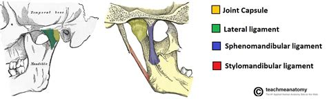 tmj diagram tmj anatomy diagram tmj get free image about wiring diagram