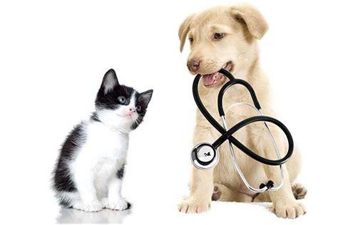 imagenes de medicas veterinarias consejos para conseguir un buen veterinario para tu macota