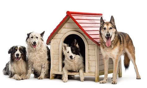 how to heat outside dog house outdoor dog house air conditioner and heater climate right air