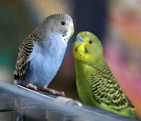 bird bracken bird farm