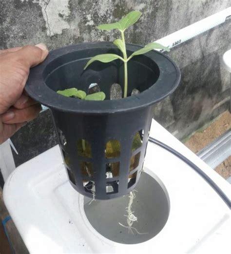 Pipa Hidroponik Isano ember kotak putih bibitbunga