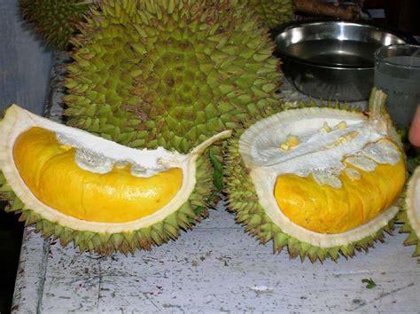 beragam informasi wisata kuliner dunia durian musang king