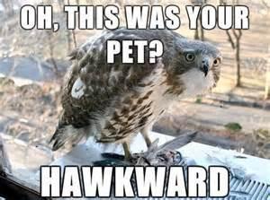 Funny Pun Memes - punday 10 rotten animal puns smosh