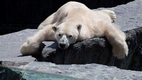 Bilder Langeweile by Langeweile Foto Bild Tiere Zoo Wildpark Falknerei