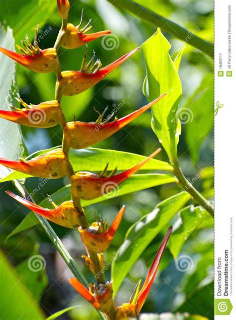 fiore uccelli paradiso uccelli tropicali dei fiori di paradiso fotografia stock