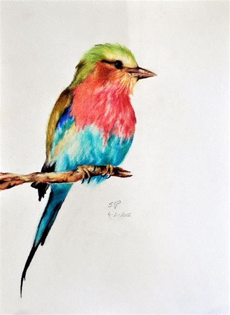 libro bird art drawing birds exotic bird 5 original colored pencil drawing by prismaticcolours for the home