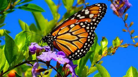 butterflies images beautiful butterflies the best relaxing piano sleep
