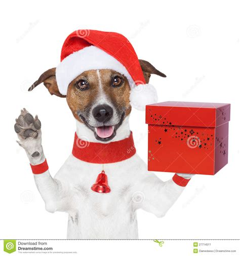 puppy present with a present box stock image image 27714511
