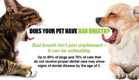 dental care for dogs the importance of pet dental care braxtons animal works
