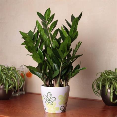 indoor plants for bathroom best plants for the bathroom indoor gardener