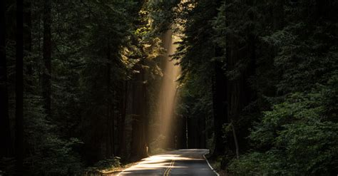 st goes on what side sun rays goes through tree on concrete road 183 free stock photo
