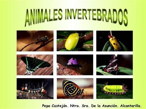 imagenes animales invertebrados para imprimir animales invertebrados ud 5
