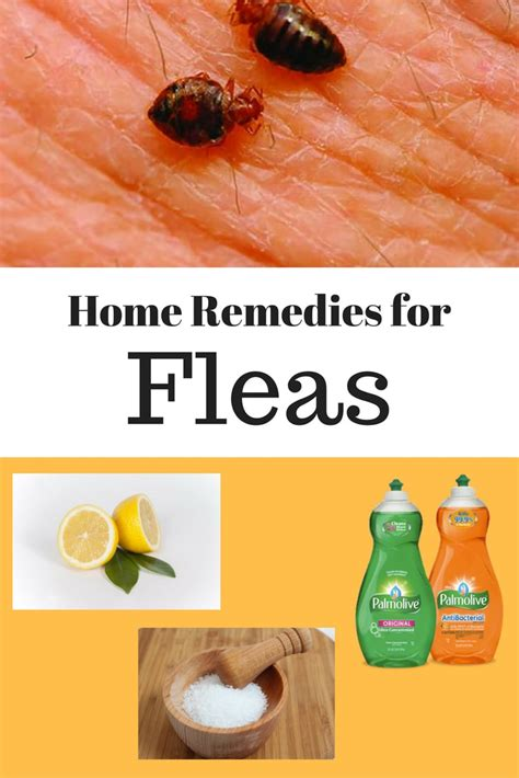 10 simple home remedies for fleas in house home remedies