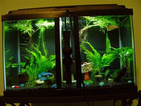 jual aquarium cupang jakarta bank bali