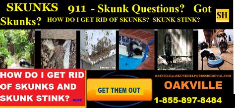 how do you get rid of skunks in your backyard mississauga axsl