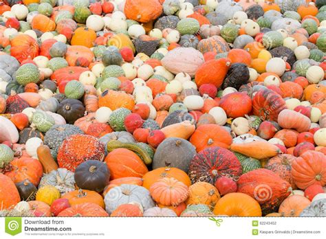 what color are pumpkins different size and color pumpkins stock photo image of
