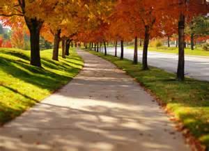 Amazing tree lined path bellisima