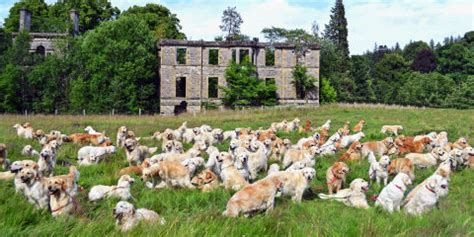 golden retriever festival 2017 scotland 12 best wineries in ny near me 2017 s top wine tastings and tours in new york