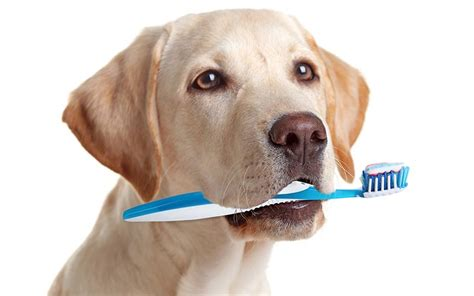 best toothpaste for dogs best toothpaste options reviews and how to use them