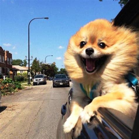 Happy Dog Meme - happy dog blank template imgflip