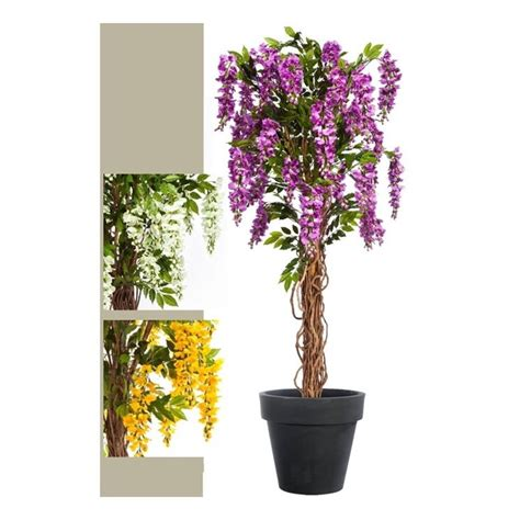 ragnetti in terrazza glicine in vaso piante da terrazzo glicine in vaso pianta