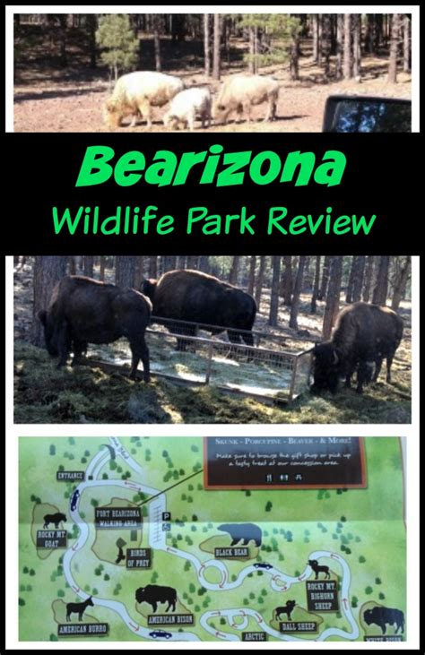 drive zoo near me bearizona wildlife park review