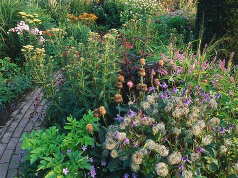 Cottage Plants by Cottage Garden Plants Hgtv