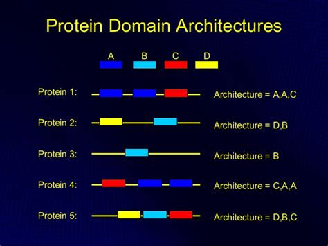 protein domain protein structural domains the tree of and the