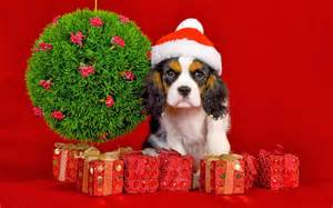 my christmas gift for dog lovers wallpaper beautiful