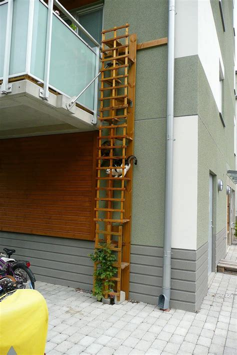 chat haus nummer treppe bepflanzen cat ideas treppe katzen