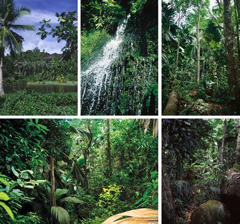 imagenes de animales y plantas de la selva exo terra conservaci 243 n silhouette