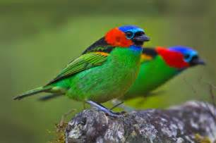 most colorful birds 20 of the most colorful bird in the world nature babamail