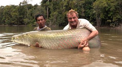 dahsyat ikan air tawar terbesar  dunia  tangkap