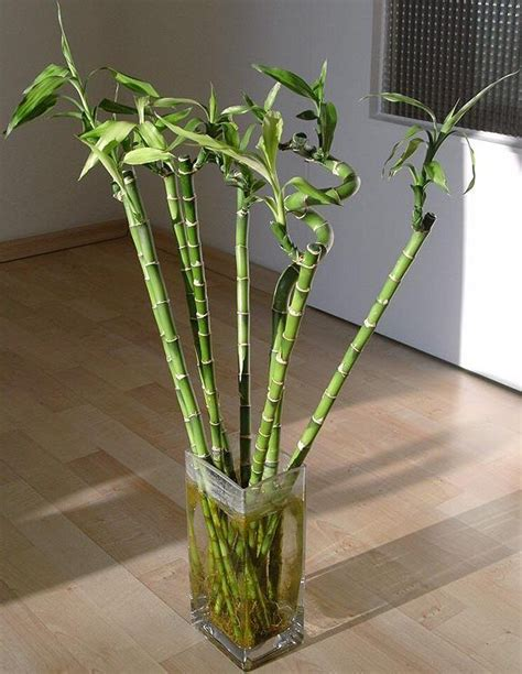 house plant types images of house plants types of bamboo house plants