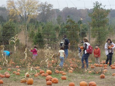 ticonderoga farms fall festivals in northern virginia for 2015 things to