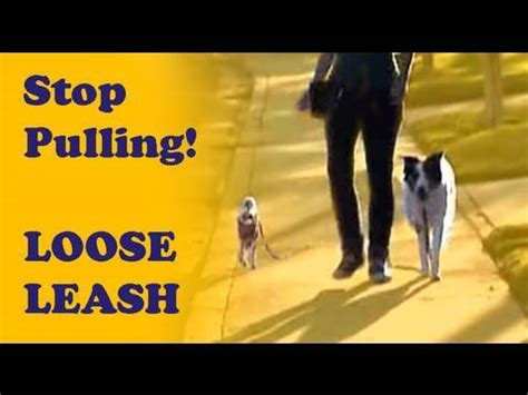 how to your not to pull when walking how to your not to pull leash walking tutorial find