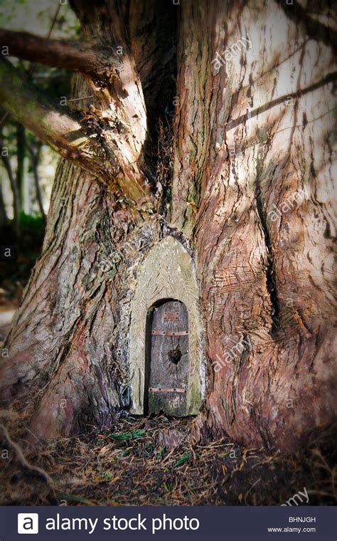 woodland tree a door in a magical woodland tree stock photo