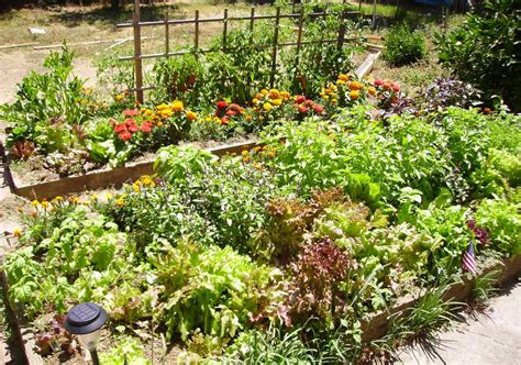 7 Gorgeous Raised Bed Vegetable Gardens Off Grid World Vegetable Garden Beds Raised