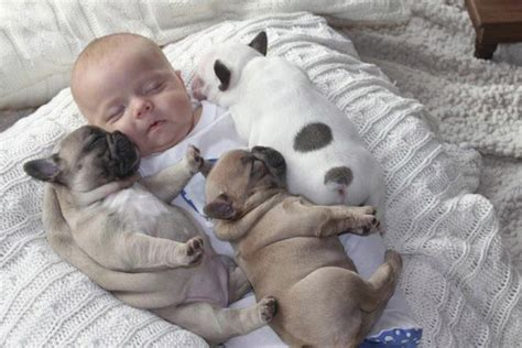 puppy and baby sleeping 10 incredibly important photos of a baby sleeping with