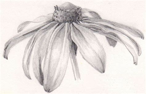 botanical drawing using graphite 1785001590 rocky mountain society of botanical artists march 2012