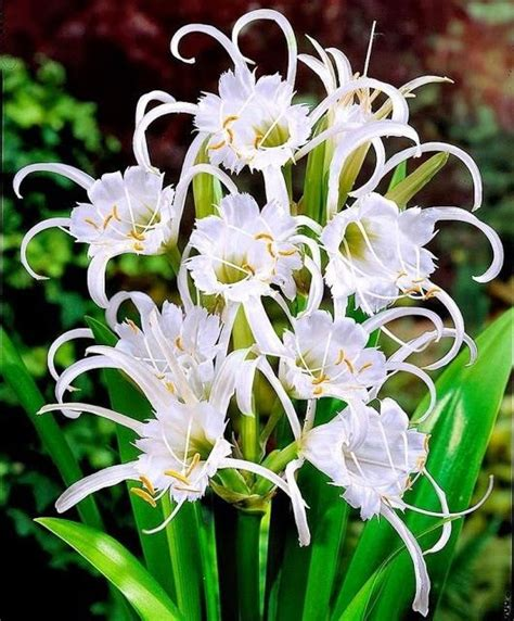 highly fragrant plants 63 best images about highly fragrant flowers on