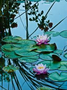 Lotus Pond Lotus Pond Pictures Photos And Images For