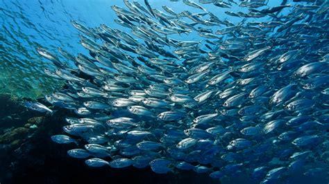 Im Wasser a z tiere im wasser tiere im wasser natur planet wissen