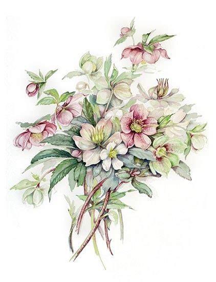 poesie fiori il di dilloconunfiore acquerelli fiori e poesie