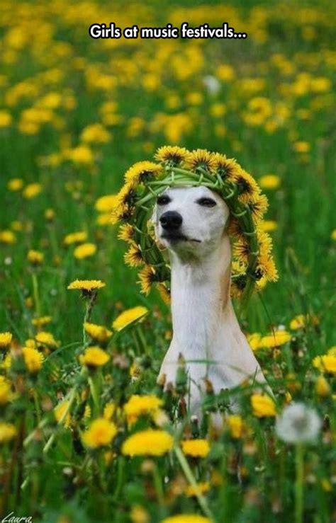 Flowe Funy flower headbands