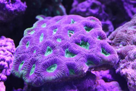 low light corals for sale absolutely fish blogs best selection of healthy corals