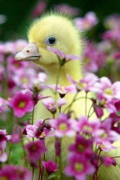 Duck Flower Detox by 1000 Images About April Showers May Flowers On