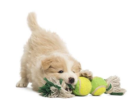 puppy daycare seattle seattle doggie daycare kent daycare pet daycare services