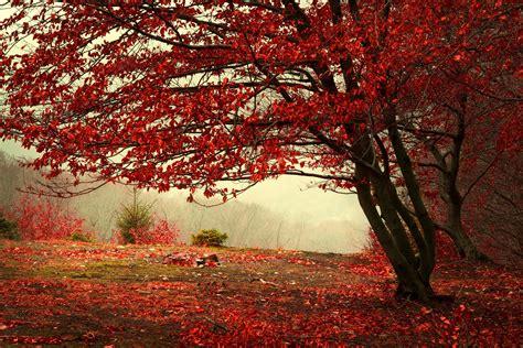 imagenes de paisajes que inspiran tranquilidad harmonie dans la nature 201 cran hd belles paysages naturels