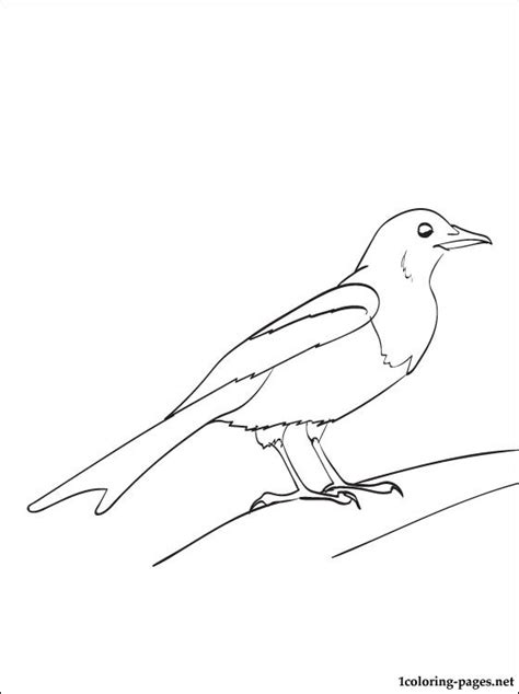 magpie bird coloring page magpie coloring and printable page coloring pages